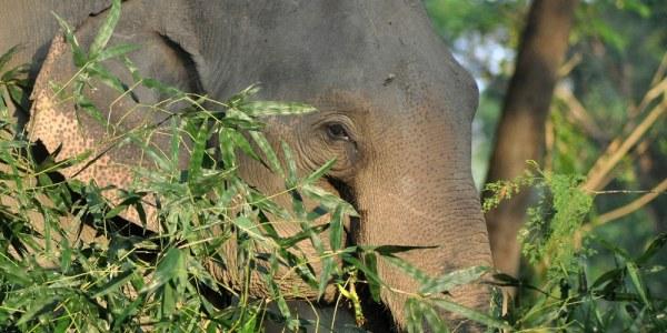 Northern Thailand Elephant Sanctuary