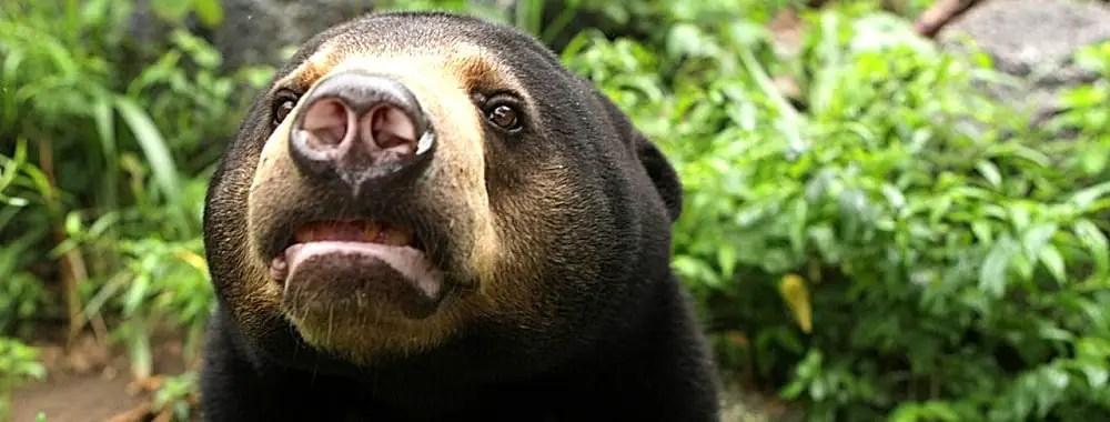 Cambodia Bear Sanctuary