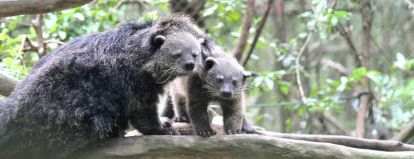 Laos Wildlife Rescue Project Civets