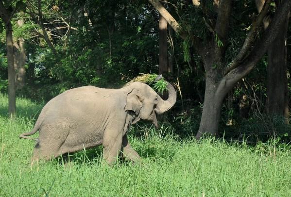 Elephant having fun at the sanctuary
