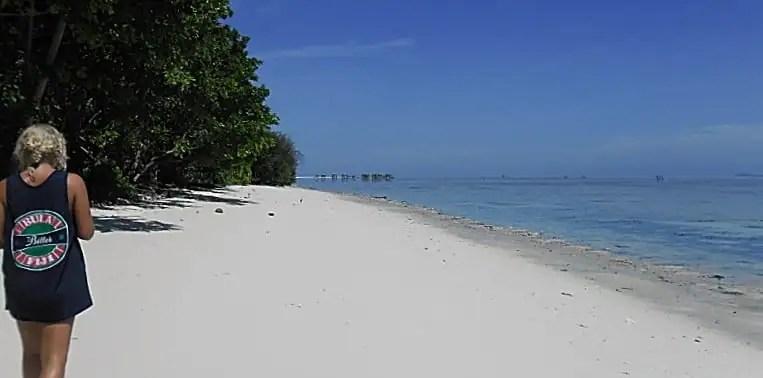 Borneo Sea Turtle Conservation project