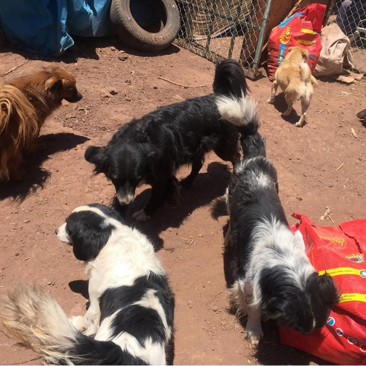 Dogs at the Cusco Shelter