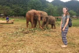 Intern with Elephants Thailand