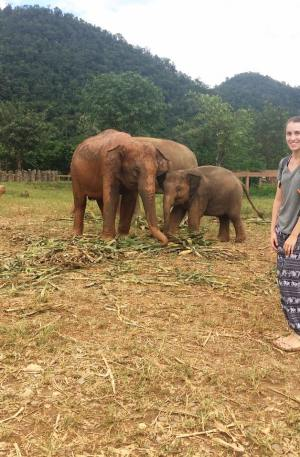 Intern with Elephants Thailand