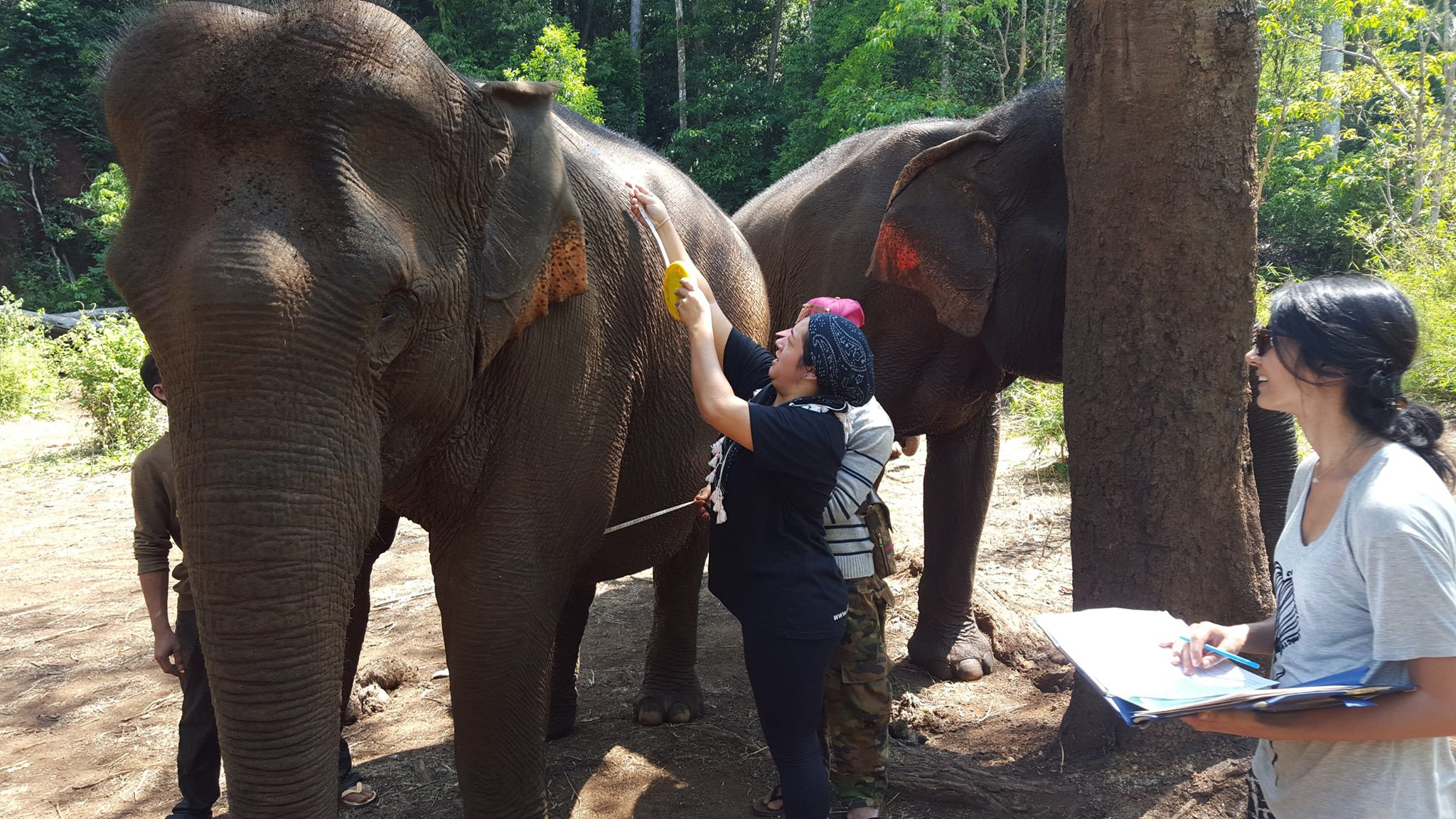 Elephant checks at the sanctuary