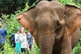 Elephant experience Cambodia
