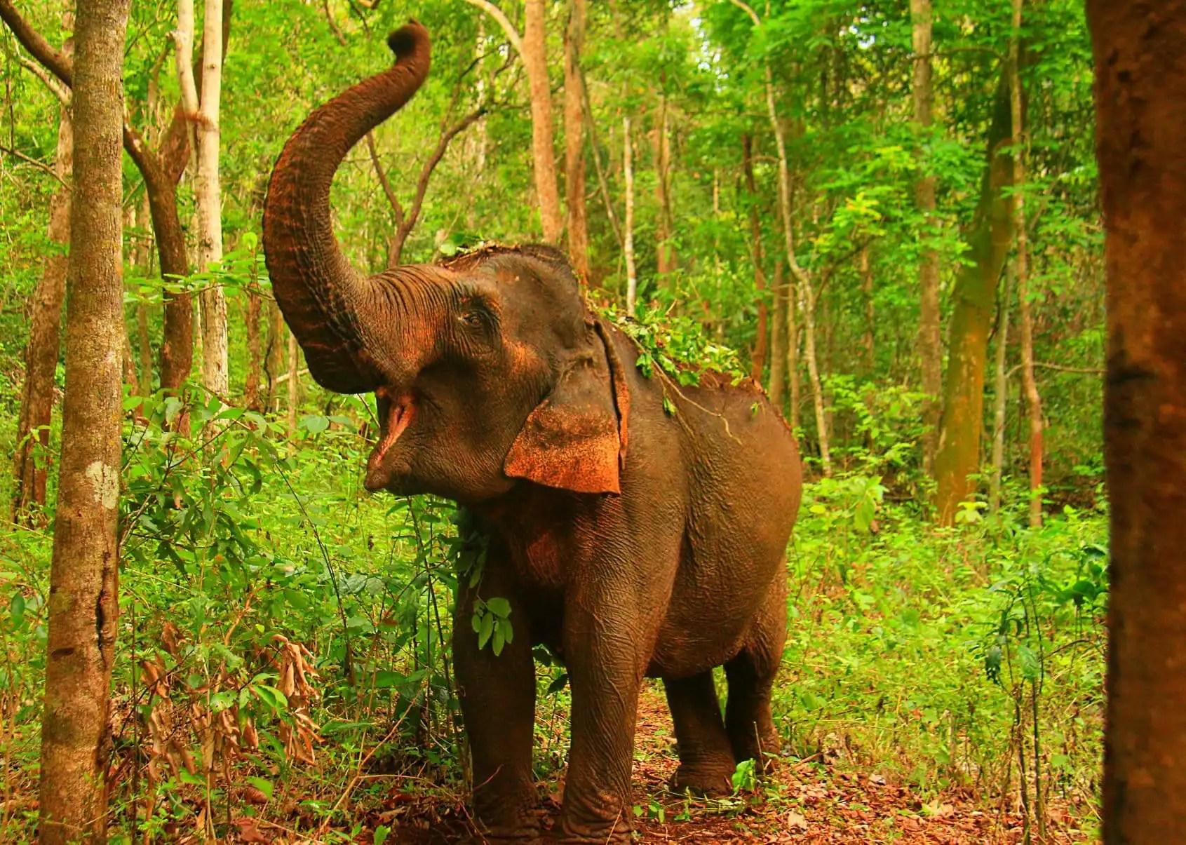 A happy elephant at the sanctuary