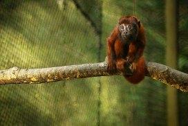 Amazon shelter wildlife
