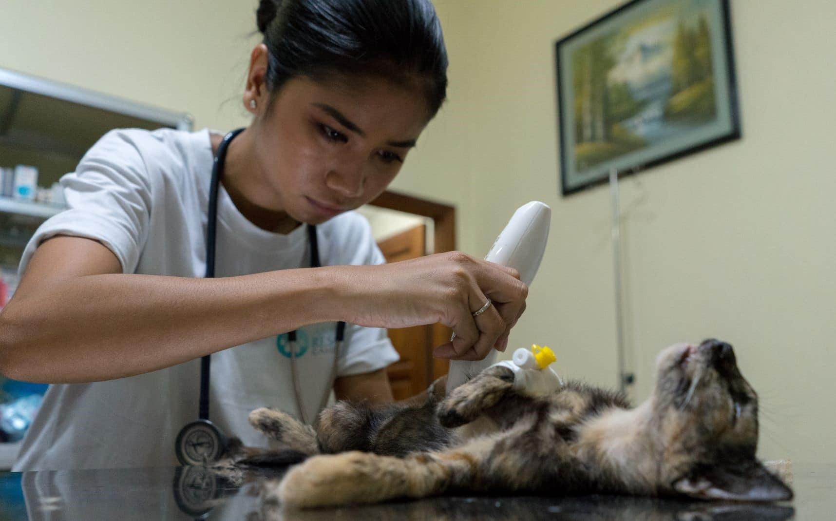 Helping Cats and Dogs Cambodia
