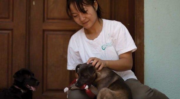 Animal Welfare Cambodia
