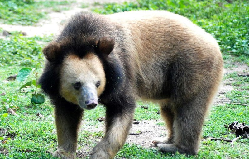 Volunteer with Bears Cambodia