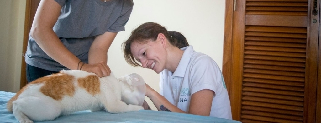 Cat & Dog Rescue Slider