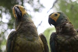 Amazon sanctuary Volunteer