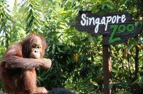 Singapore Zoo Singapore