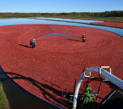 ocean spray case study How ocean spray cut its shipping emissions 20 percent to learn more about the efforts of ocean spray or this case study series.