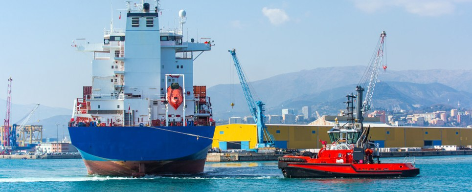 APM investment will allow port of Vado to handle more shipment sof export cargo and import cargo in international trade.