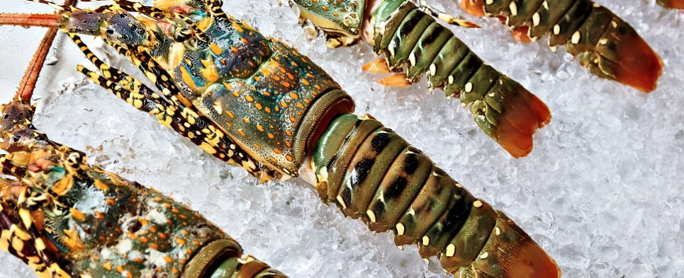 Ocean carrier CMA CGN is seeking to carry live lobster shipments of export cargo and import cargo in international trade.