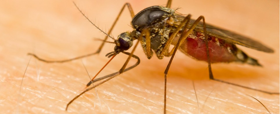 Zika is having impact on shipments of export cargo and import cargo in international trade.
