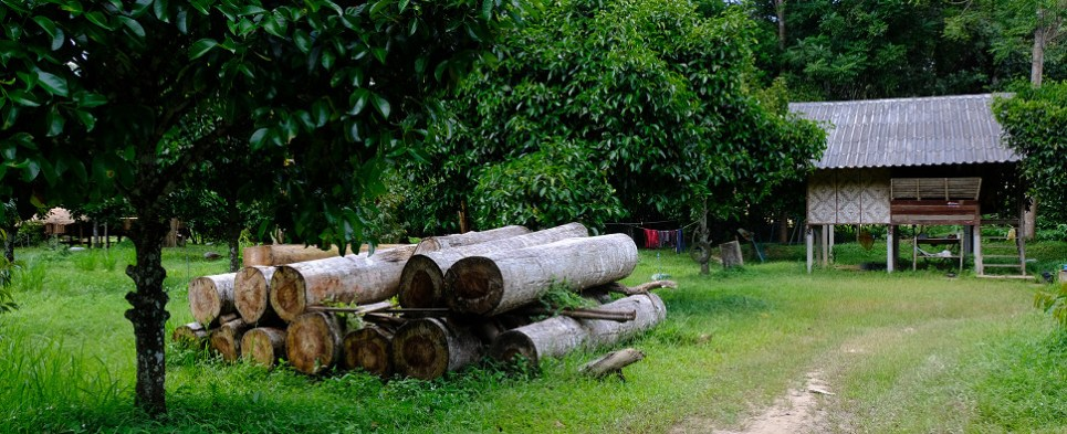 USTR monitors Peru timber shipments of export cargo and import cargo in international trade.