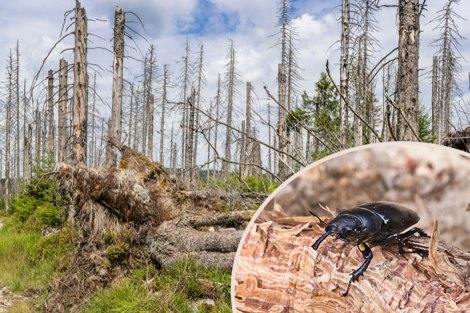 Disease Infested Forests