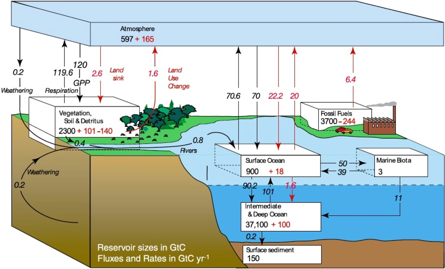 hight resolution of carbon sink diagram