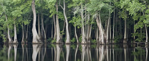 Nature Conservancy offers carbon offsets protecting the Tensas River Basin