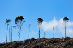 Illeagl logging contributes significantly to globla carbon emissions