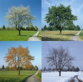 Snow still happens in winter - even in a climate changed world
