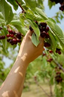 Cherry picking is a favorite activity of climate change deniers