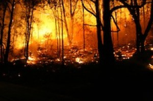 Climate change will lead to more wildfires