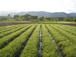Irrigation, Yunnan, China. Source: GWF Flickr Page