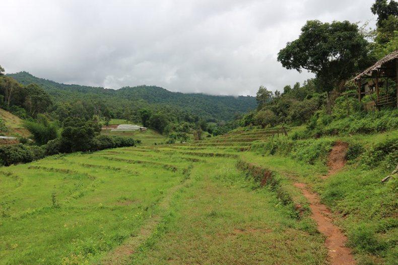reis door Thailand