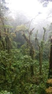 backpacken door Costa Rica