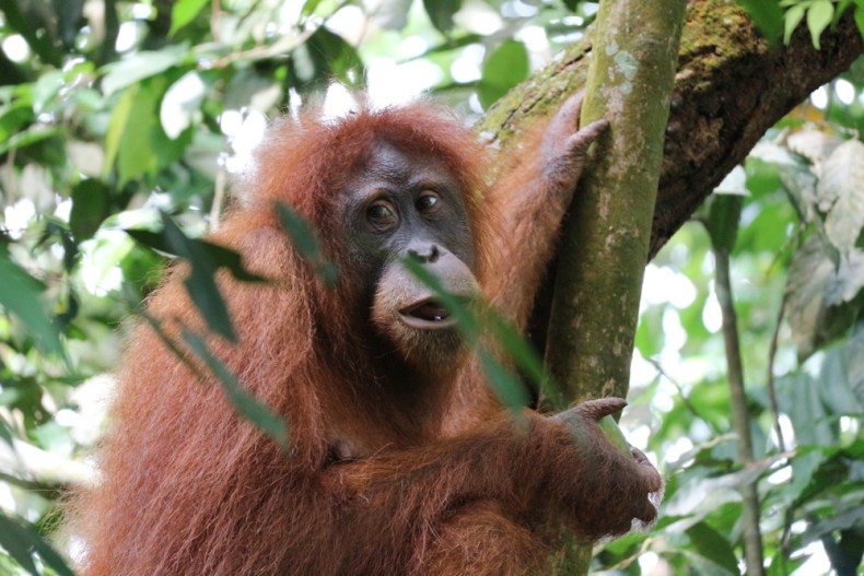 jungle trekking in Bukit Lawang