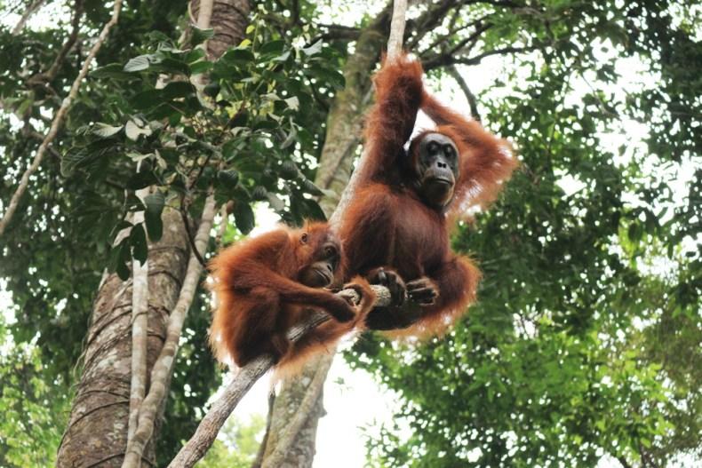 jungle trekking in Bukit Lawang