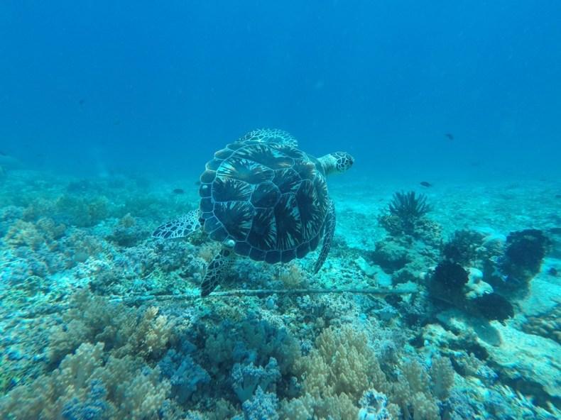 snorkelen rond de Gili eilanden
