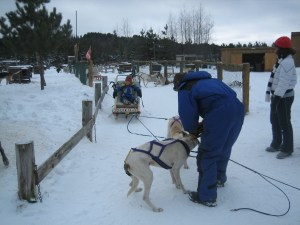 Dog sledding, Quebec's Pontiac region, Canada