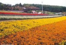 Around Beia, Hokkaido, Japan, 2001