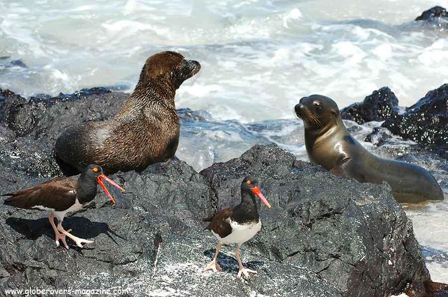 Galapagos Islands, Ecuador, South America