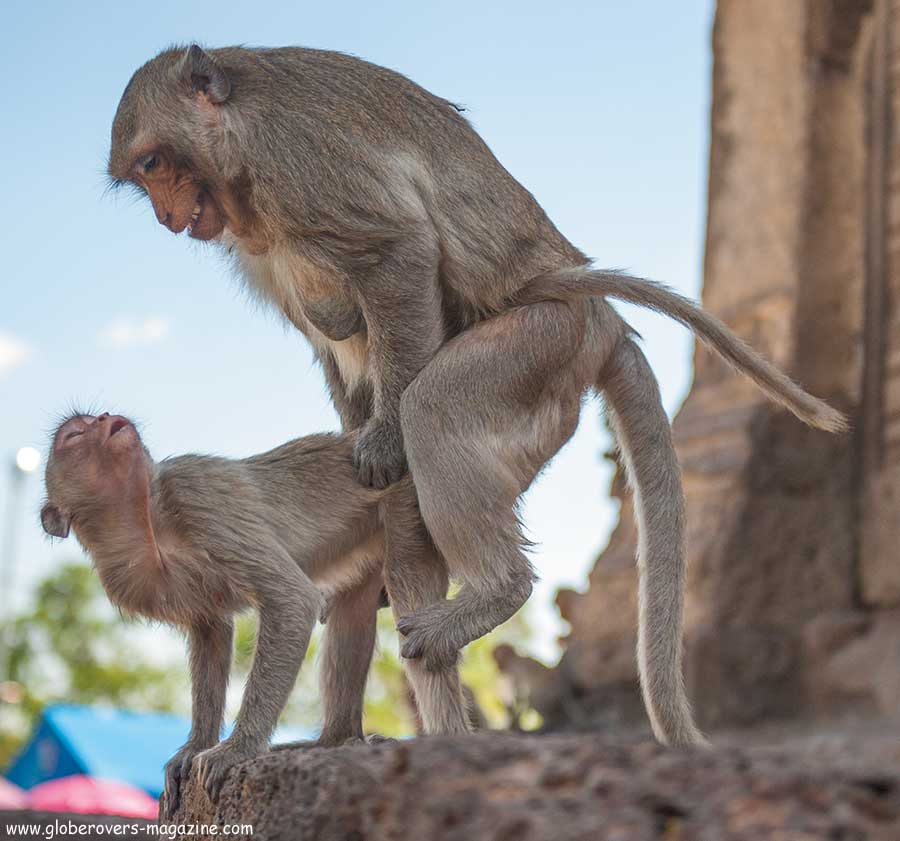Lopburi Monkey buffet festival, thailand