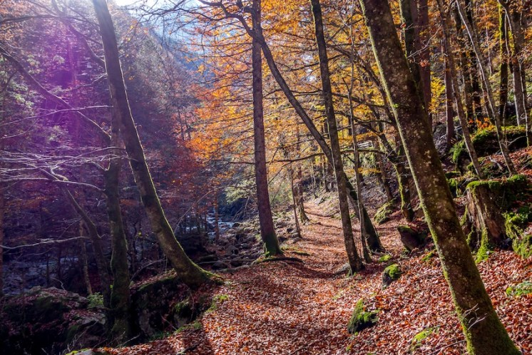 Kloentalersee-Wald_Travelita