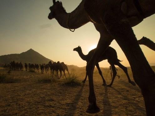 Pushkar Kamelmesse Indien-24