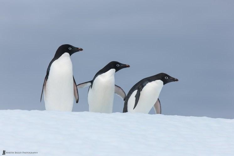 Martin Bailey Antarktis