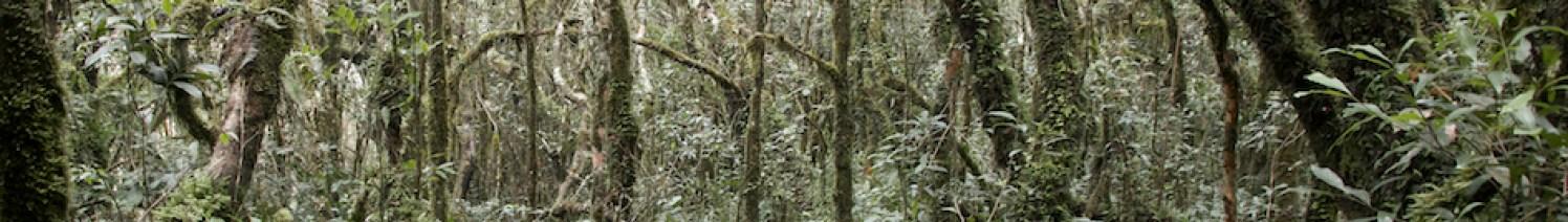 Baumhäuser Wald