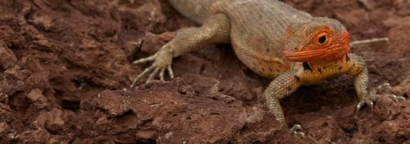 Galapagos Eindrücke Reise Schiffrundfahrt Tiere