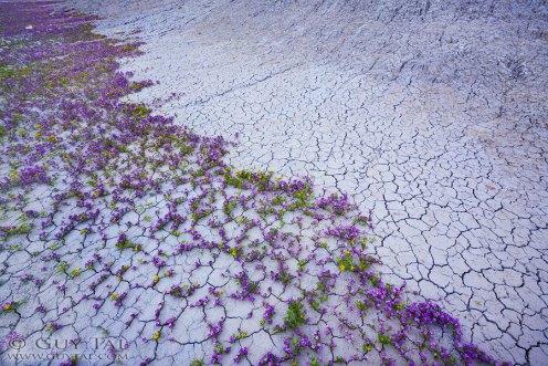 Guy Tal Fotografie Wüste Blumen