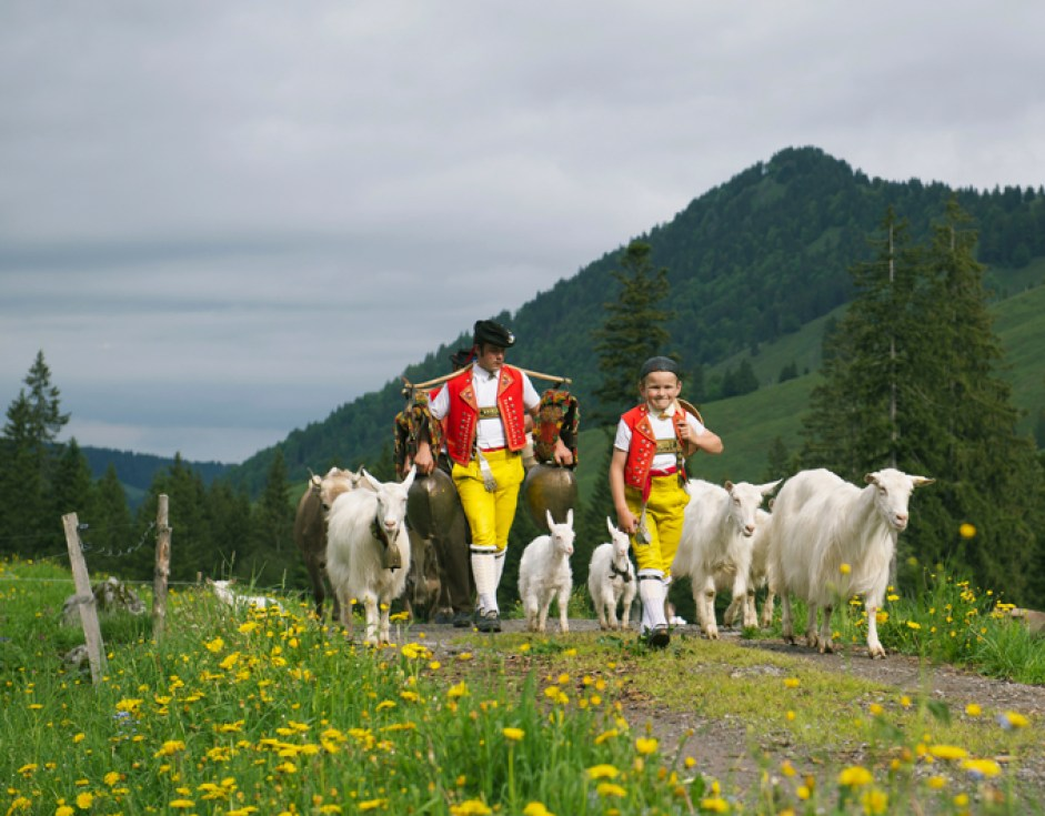 Alpaufzug – Schwägalp, Appenzellerland