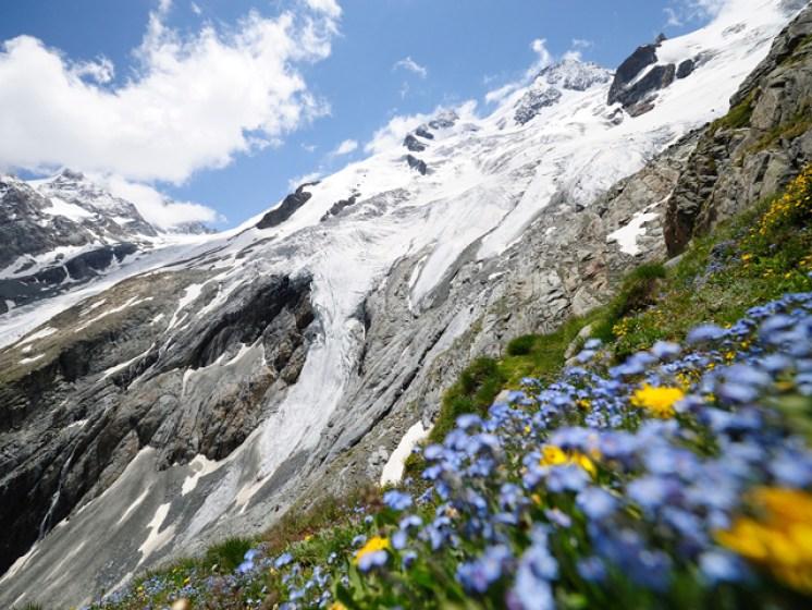Alpblumenwies mit Roseg-Gletscher – Coazhütte, Val Roseg, Oberengadin