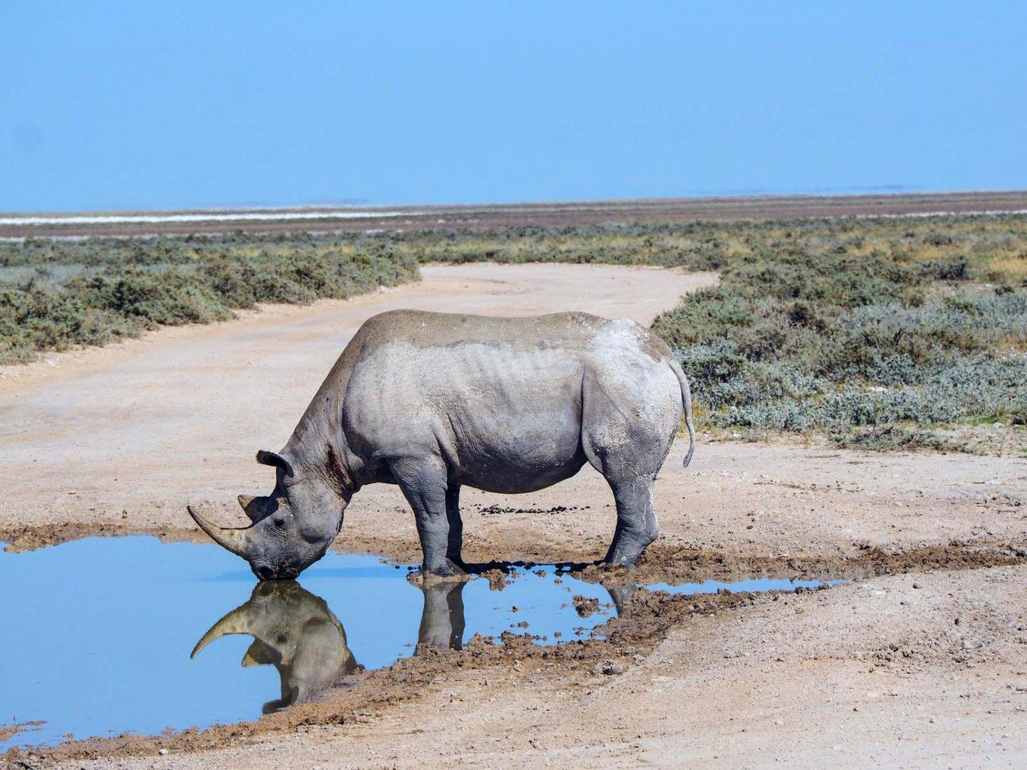 Namibia Puriy Nashorn