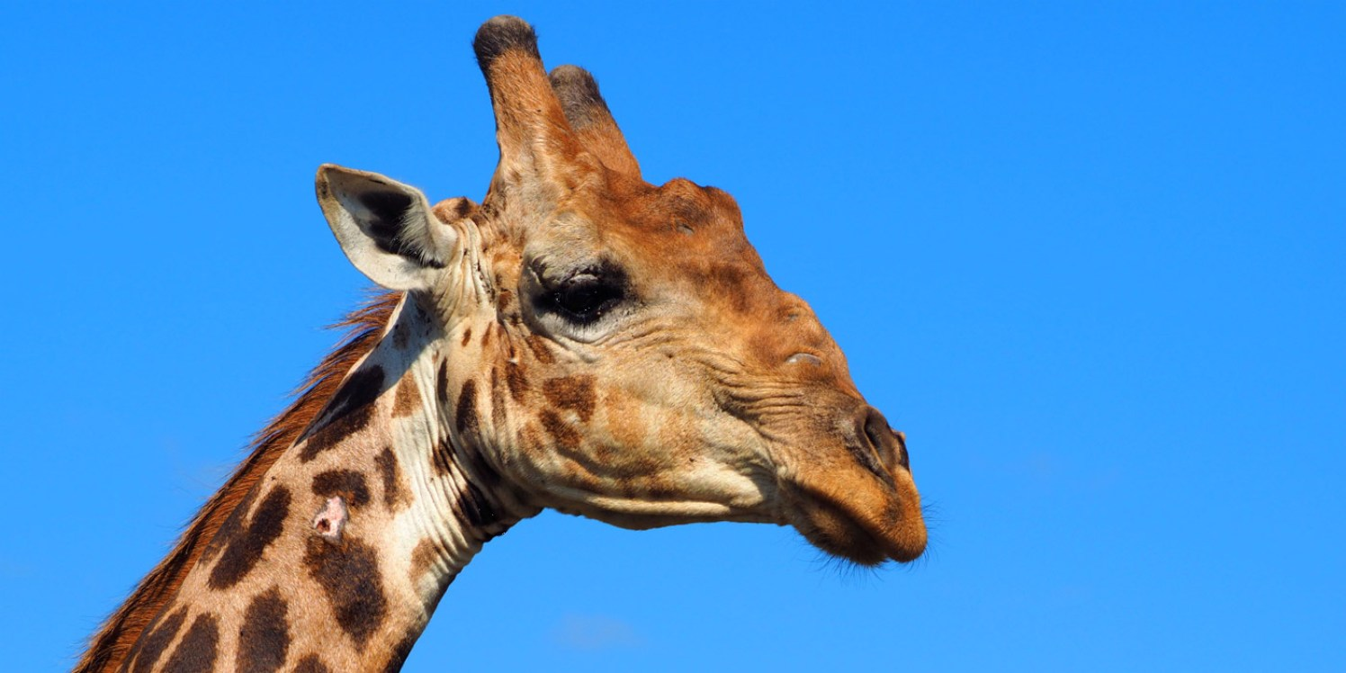 Suedafrika-Safari-Nationalpark-Giraffe-Slider